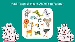 materi animals